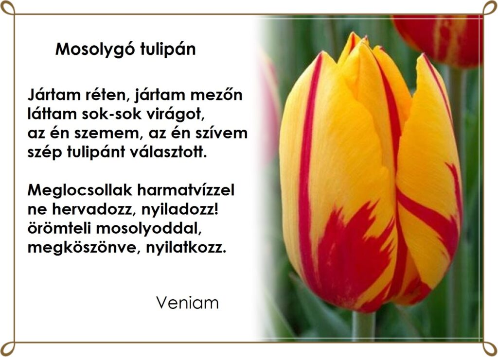 Mosolygó tulipán