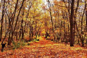 Az őszi fák