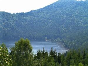 Erdőország