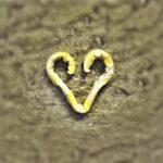 Gyűrt szív