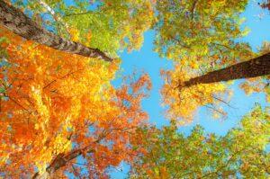 Itt az ősz