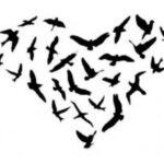 Szabad szerelem