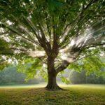 Kívánságok fája