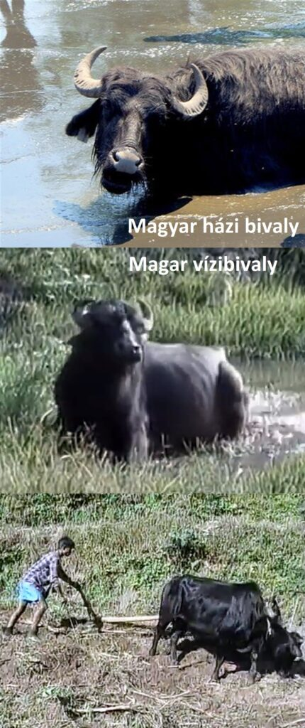 magyarokesmagarokkep6